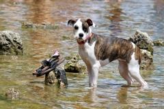 Dog at Barton Springs